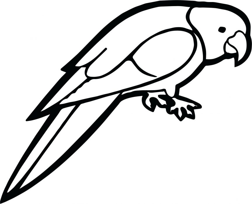 Line Drawing Penguin : Parrot easy drawing at getdrawings.com free for personal use