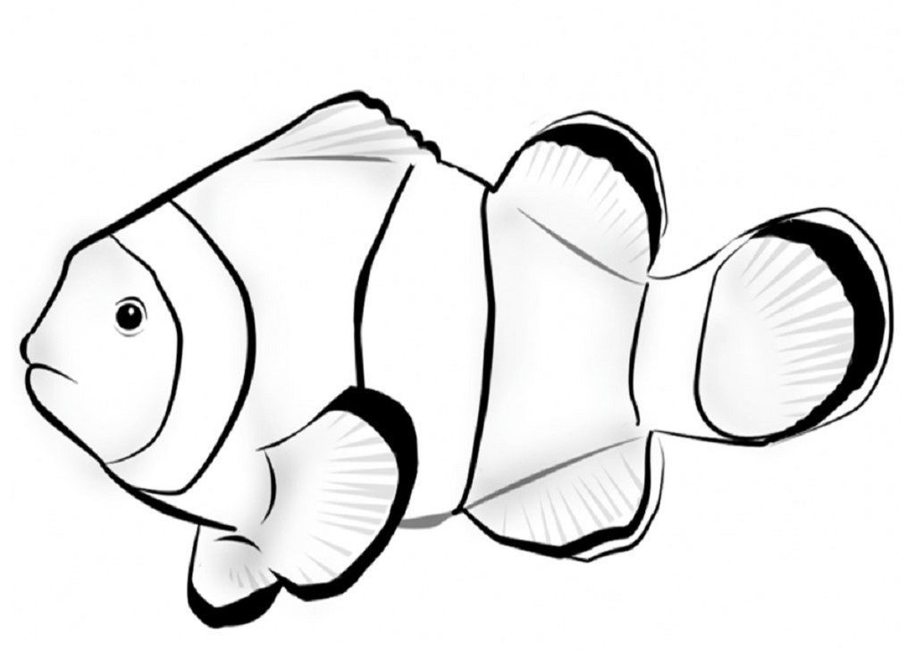 parrot fish drawing at getdrawings com free for personal use