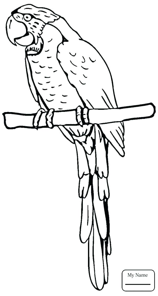 618x1154 Flying Fish Coloring Page Parrot Birds Grey
