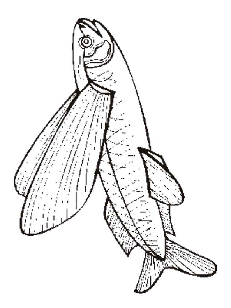 750x1000 Flying Fish Coloring Pages. Download And Print Flying Fish