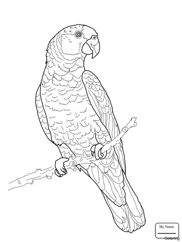 Parrot Fish Drawing at GetDrawings