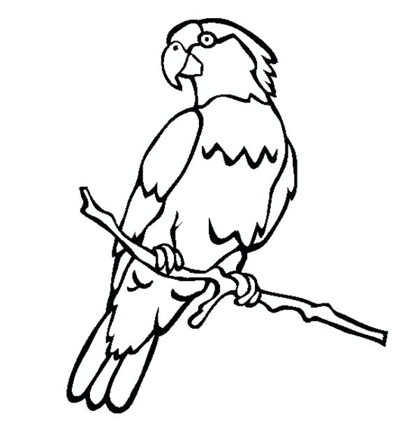 600x612 Parrot Coloring Page Awesome Parrot Coloring Page Parrot Fish