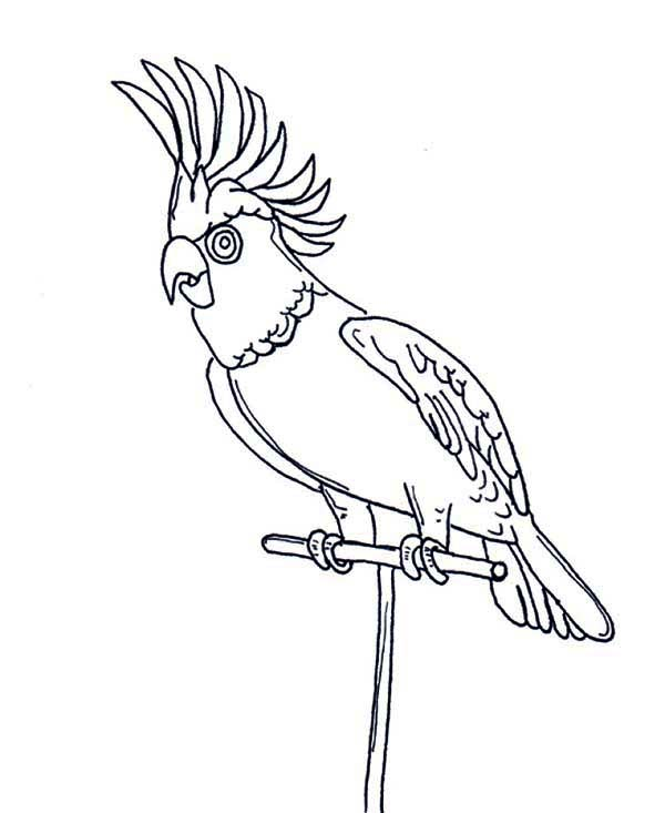600x733 Awesome Parrot Coloring Page Awesome Parrot Coloring Page Color