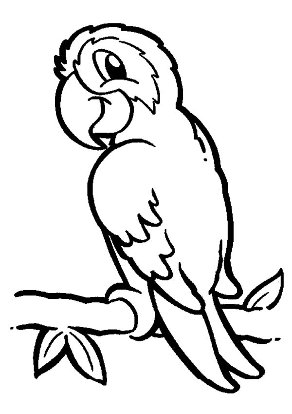 600x849 Parrot On Branch Coloring Page
