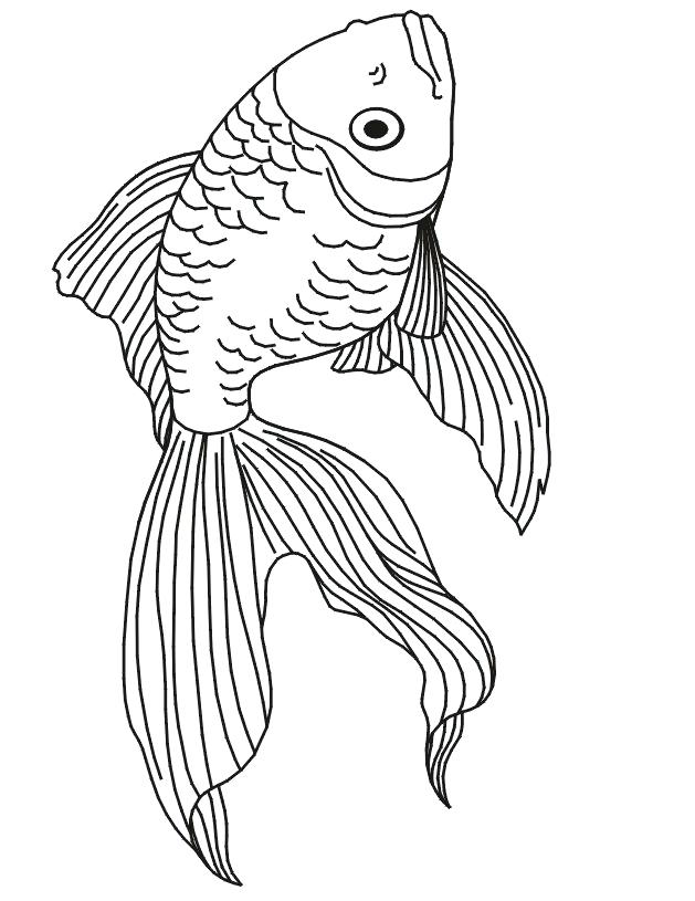 629x815 realistic fish coloring pages tropical page tank ocean