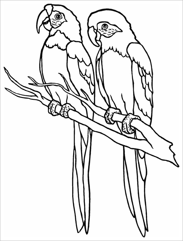 Parrot Flying Drawing