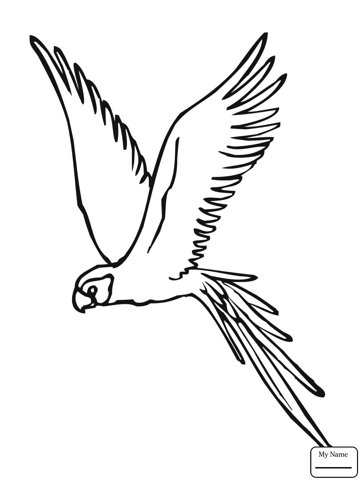 Parrot Flying Drawing at GetDrawings | Free download