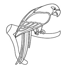 Parrot For Drawing