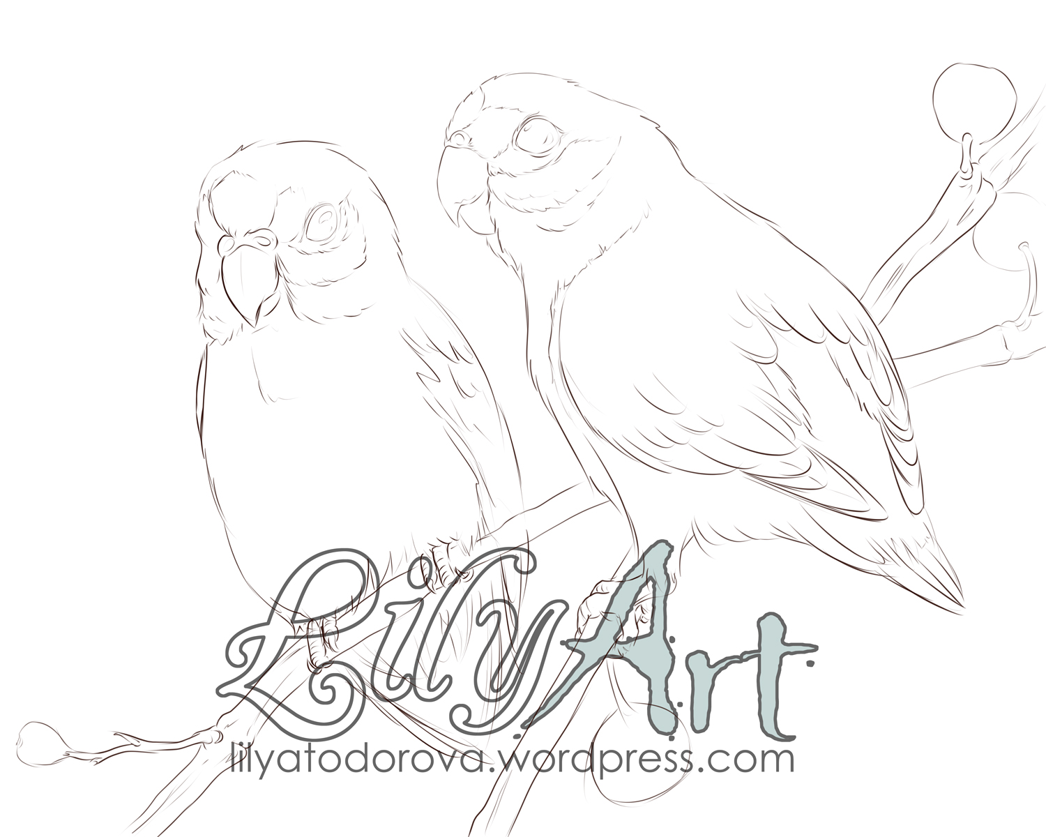 1500x1200 Double Eyed Fig Parrot Wip Lily Art