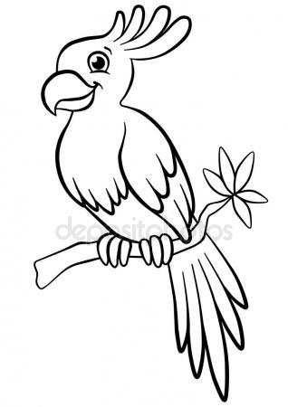 318x450 Cute Parrot Drawing Stock Vector Baavli