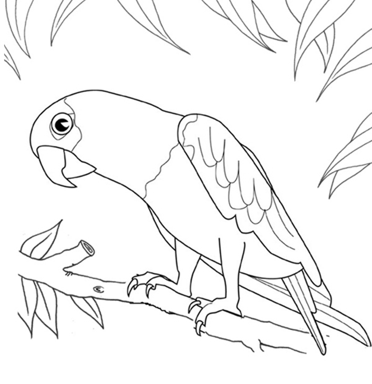 Parrot Line Drawing At Getdrawings Free For Personal Use