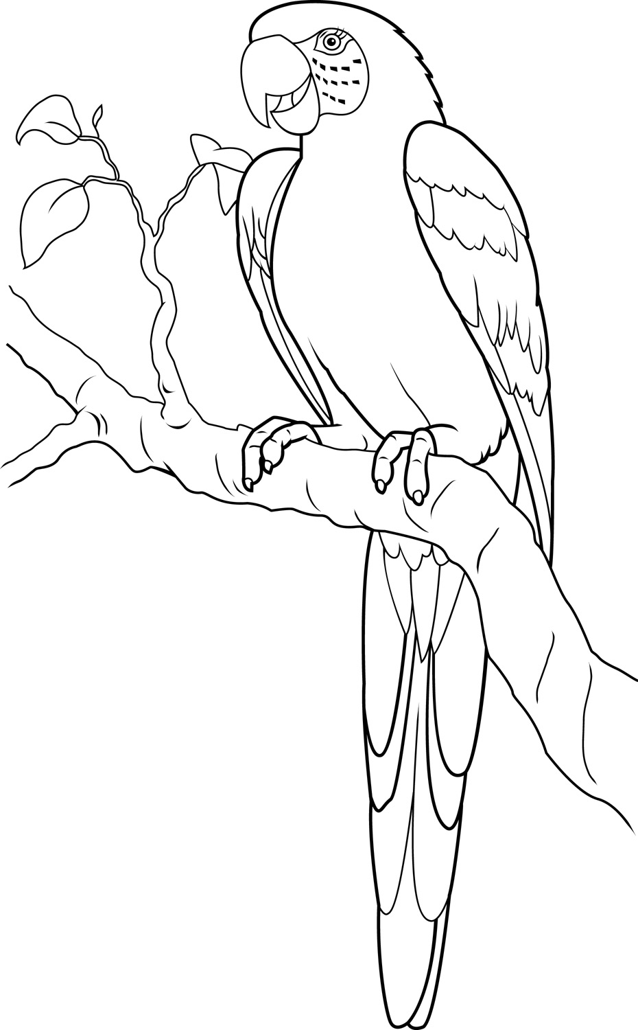 Parrot Line Drawing at GetDrawings.com | Free for personal use ...