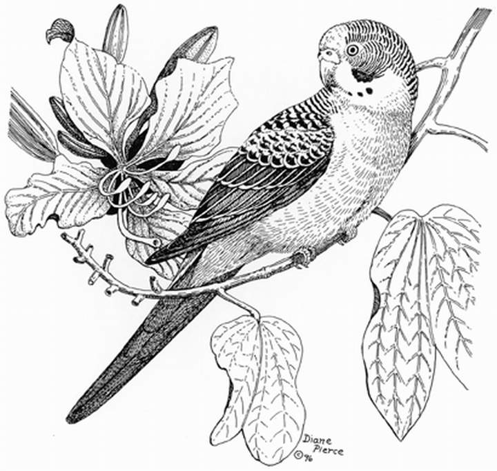 720x683 Diane Pierce's Pencil Drawing ~ Splendid Pictures Around The Net