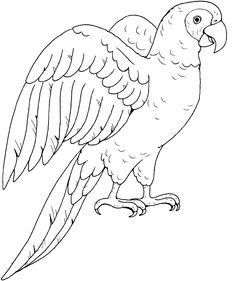 Parrot Pictures Drawing