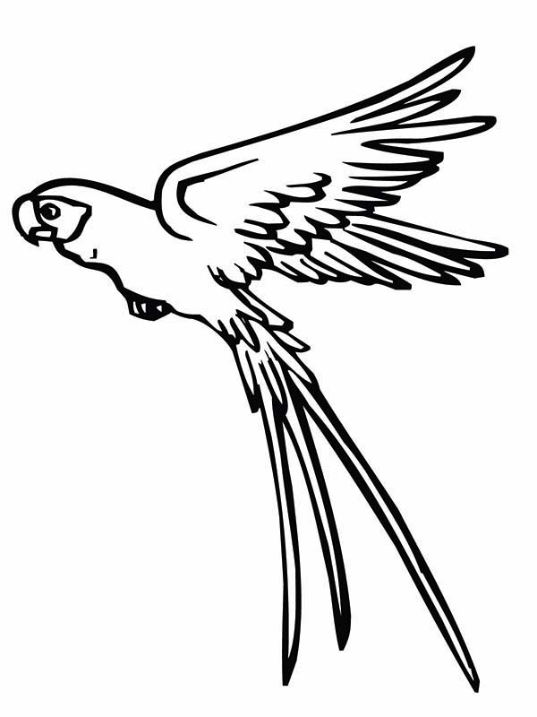 flying bird coloring page - parrot pictures drawing at free for