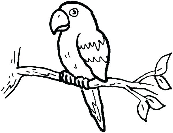 Parrots Drawing At Getdrawings Com Free For Personal Use Parrots