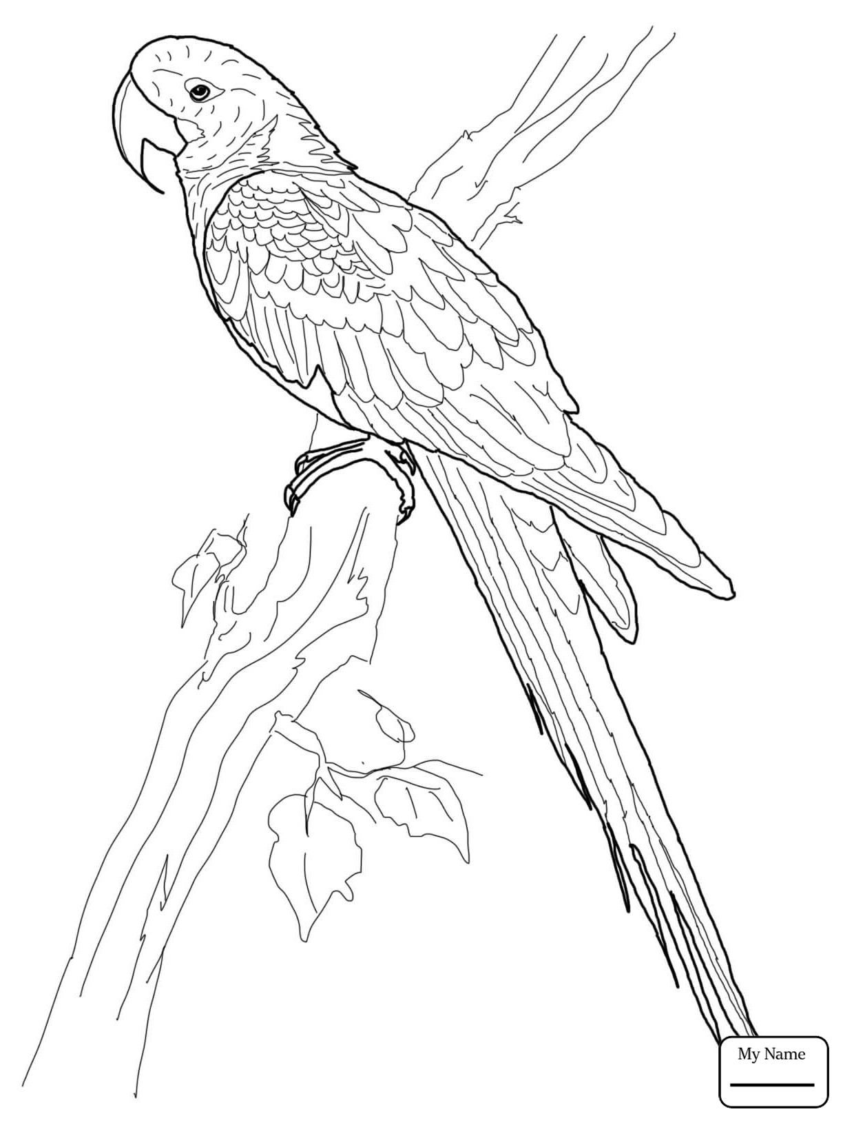 Parrots Drawing at GetDrawings.com | Free for personal use Parrots ...