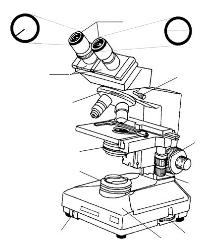 Parts Of A Microscope Drawing