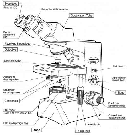 500x529 Parts Of The Microscope Worksheet