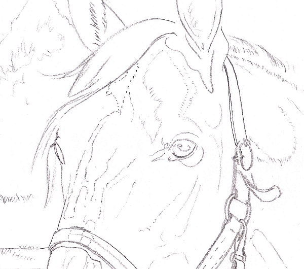 600x530 How To Draw A Horse Using A Grid