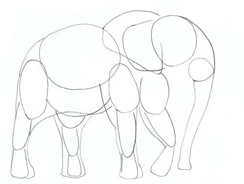 500x377 How To Draw An Elephant