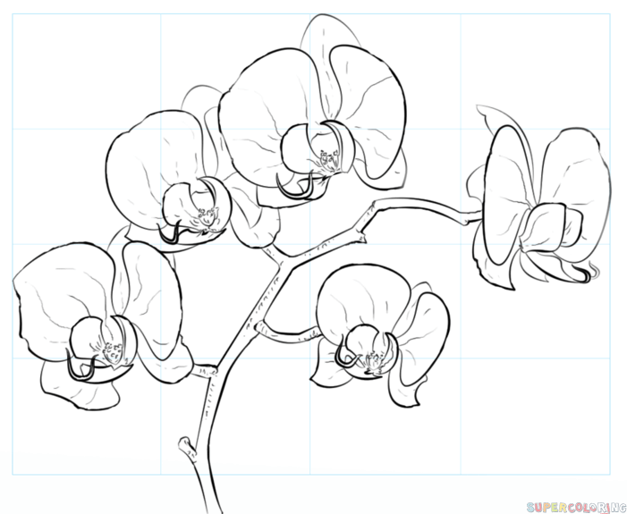701x575 How To Draw An Orchid Step By Step Drawing Tutorials