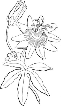 236x408 Passion Flower Embroidery Pattern Passion Flower, Embroidery