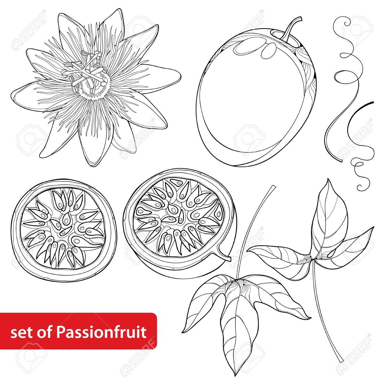 1300x1300 Set With Outline Passion Fruit Or Maracuya. Half Fruit, Leaf