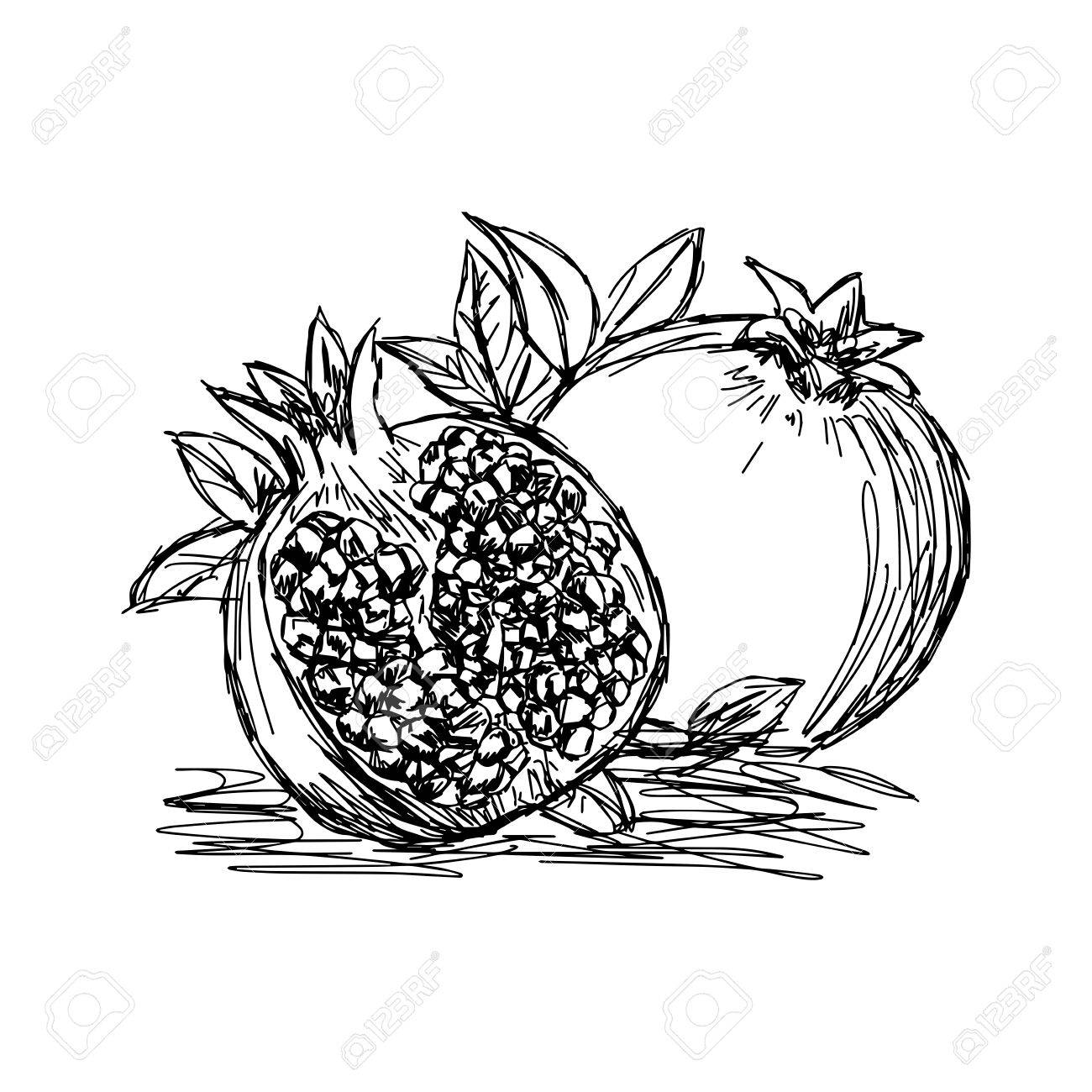 The Best Free Pomegranate Drawing Images  Download From