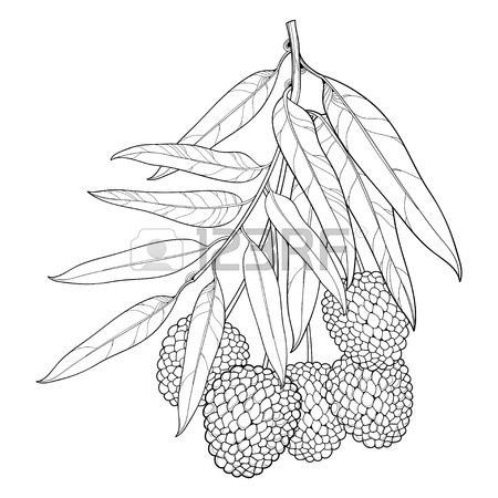 450x450 Branch With Outline Ripe Passion Fruit Or Maracuya Fruit And Leaf