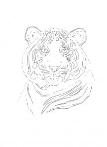 217x300 52 Best Tiger Drawings Images On Outline Drawings