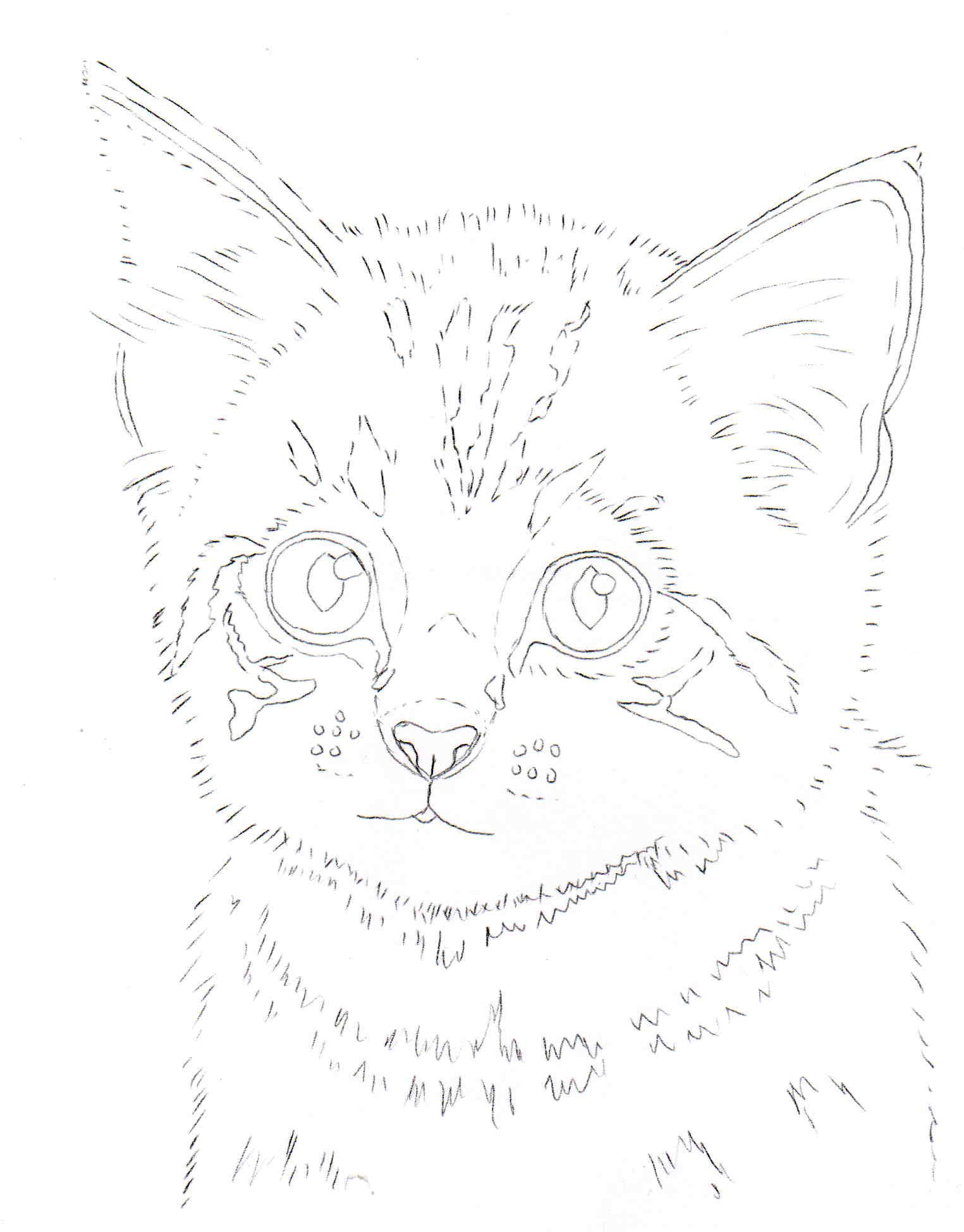 1525x1949 How To Draw A Kitten Pastel Pencils, Pastels And Drawings