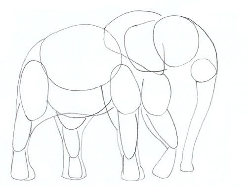 500x377 How To Draw An Elephant, Step 4 Drawing