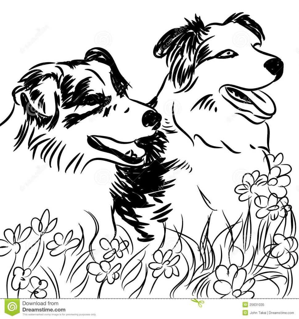 970x1037 Coloring Border Collie Coloring Book Portrait Timo Pastel Pencil