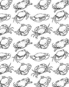236x295 How To Draw A Crab Step By Step 2 New House Projects