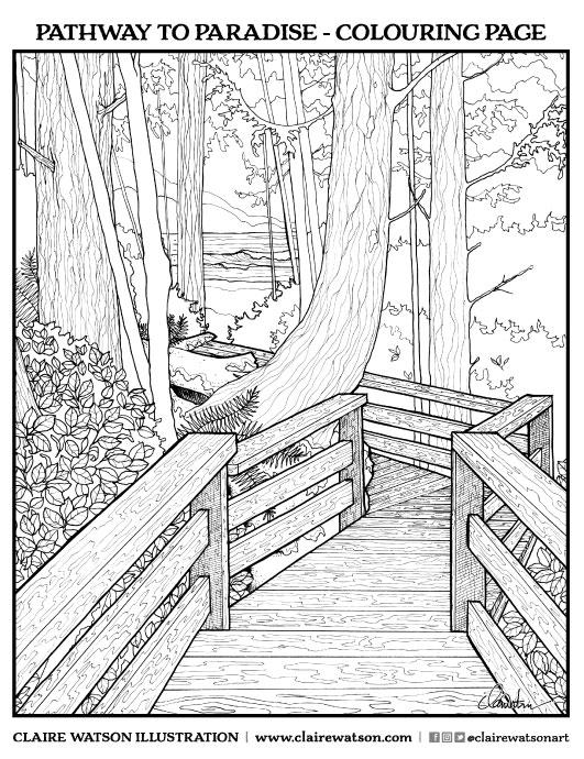 531x690 Illustration Claire Watson