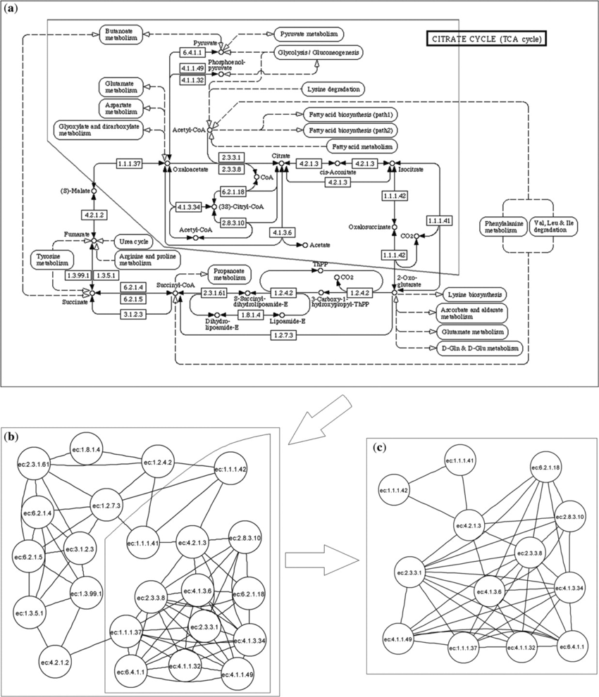 850x990 A Visualized Example Of Sub Pathway Mining. (A) A Metabolic