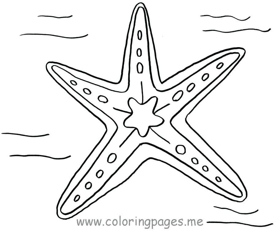 900x753 Star Fish Coloring Page