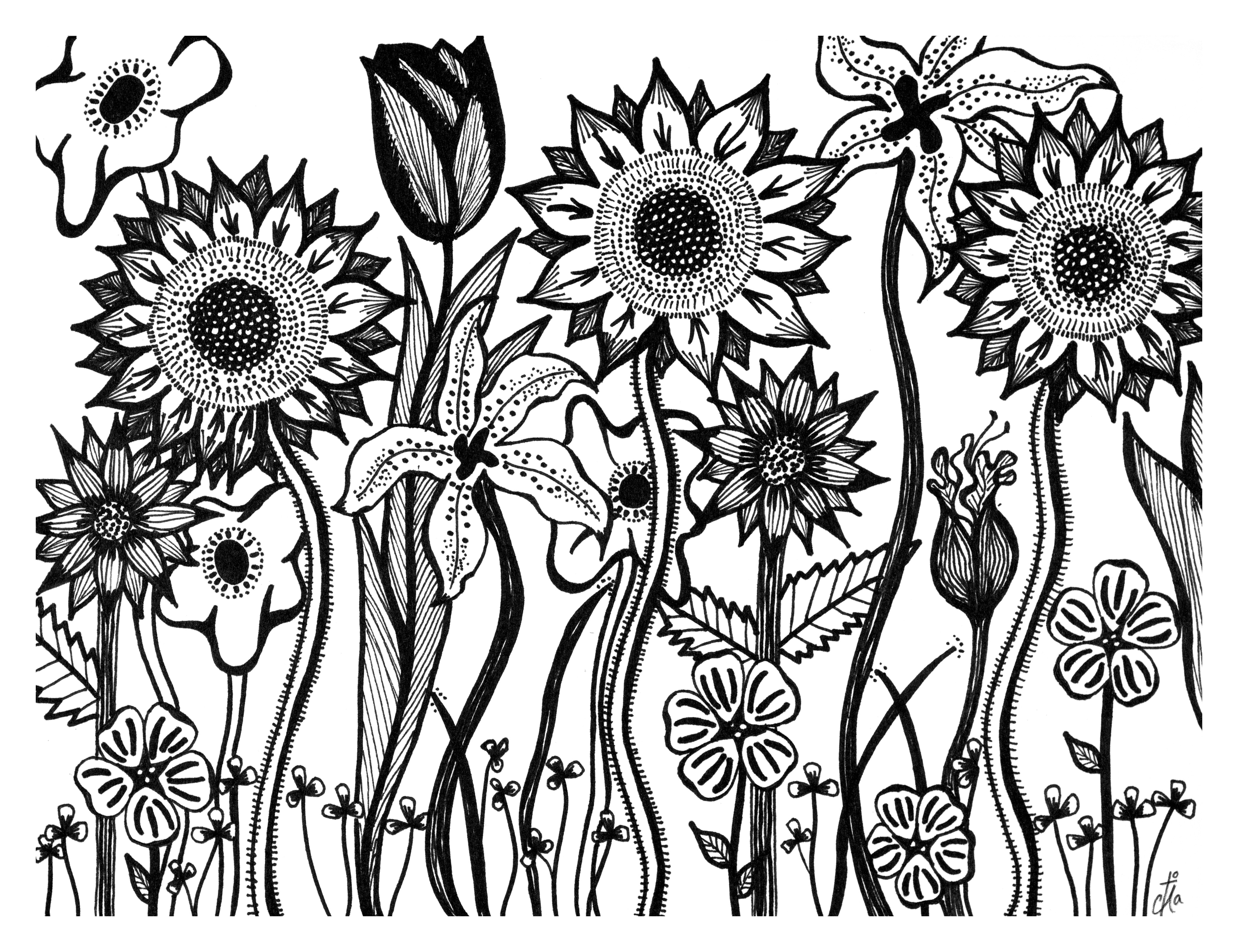 4190x3223 Eleletsitz Sunflowers Drawing Tumblr Images