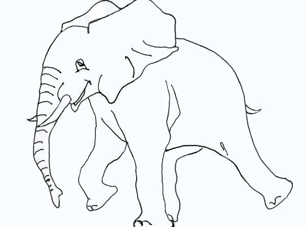 Patterned Elephant Drawing