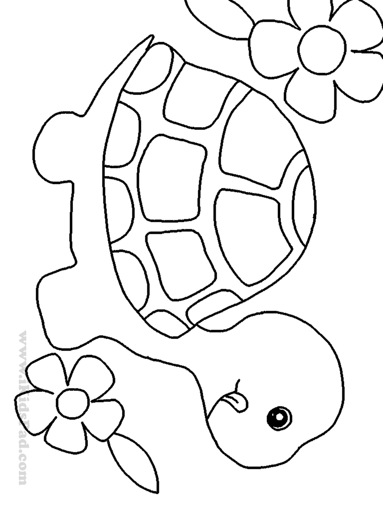 768x1024 Turtle Pattern. I'M Thinking About Using This Image