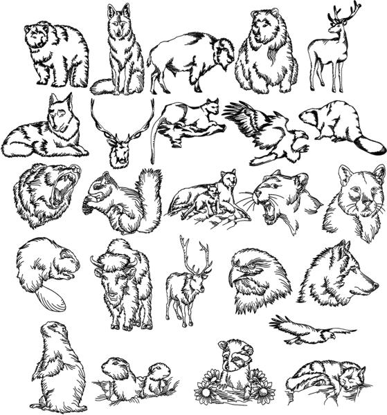 559x600 Advanced Embroidery Designs