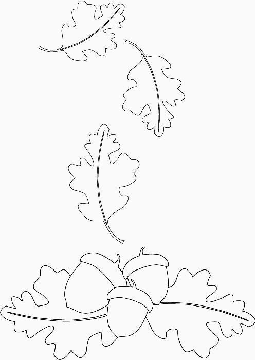496x700 Line Drawings