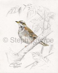 236x297 Pin By Kim Alsbrook On Steph' Thorpe Bird Artist