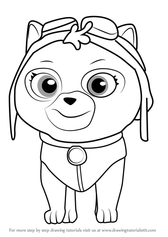 566x800 Learn How To Draw Cat Skye From Paw Patrol (Paw Patrol) Step By