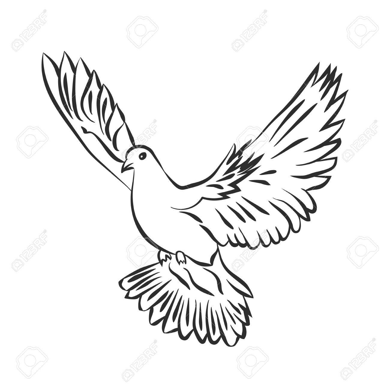 1300x1300 Flying Dove Vector Sketch. Dove Of Peace. Svector Illustration
