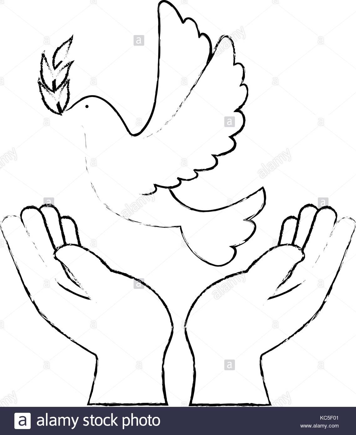 1138x1390 Dove Human Hands Peace Symbol Stock Photos Amp Dove Human Hands