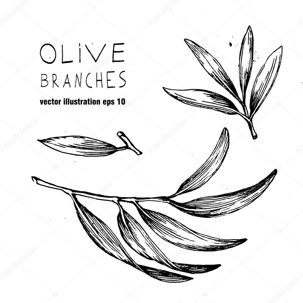 1024x1024 Set Of Hand Drawn Vector Olive Branch Logo. Olives Oil Sign