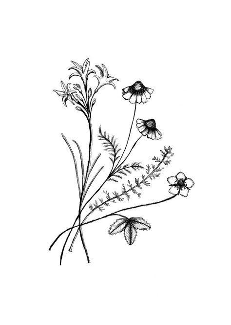 474x665 105 Best Art 2d Amp Illustration Images On Botanical