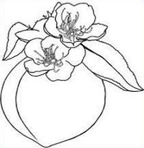 210x216 Peach Blossom Clipart